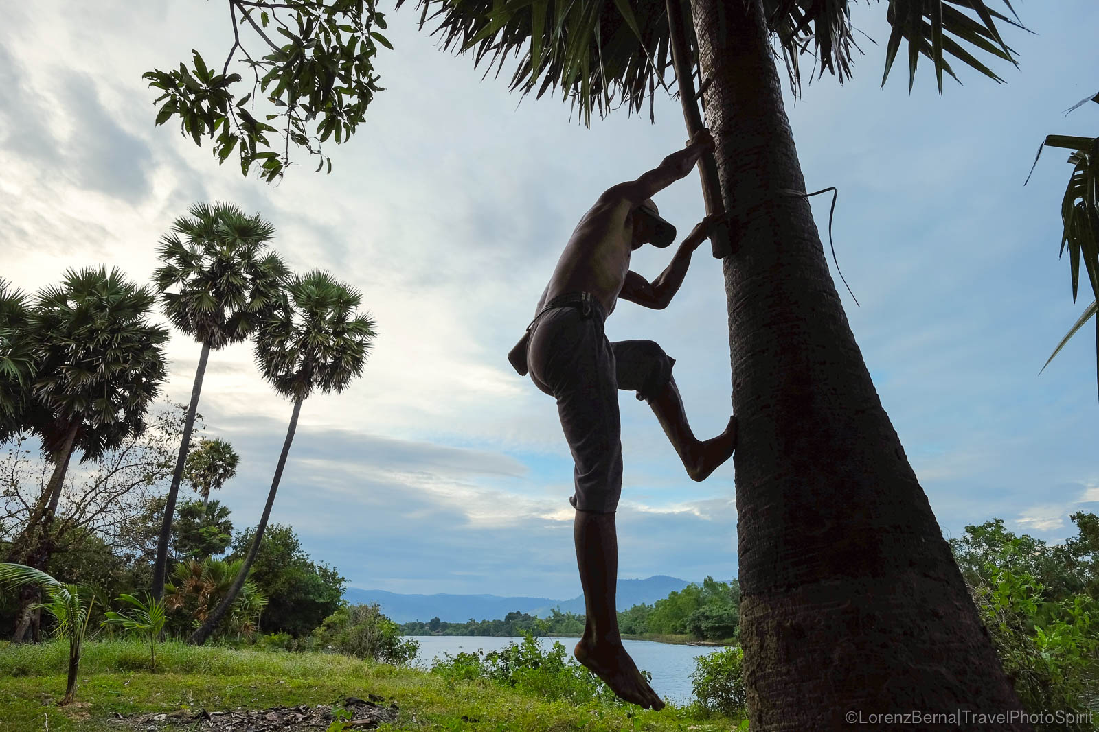 Man collecting the sugar palm in Kampot countryside, Cambodia