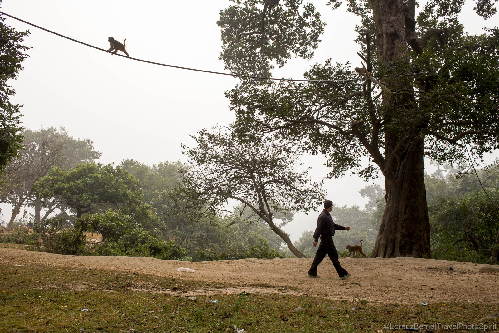 A local man walking in the Sleshmantak Forest of Pashupatinath, Kathmandhu, while a monkey is walking on a electrical wire.