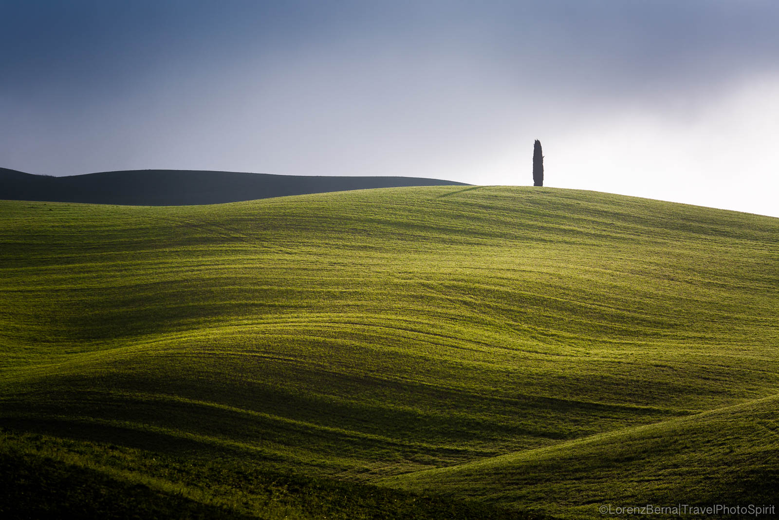 Lonely cypress on an open valley of Val D'Orcia, Tuscany, Italy