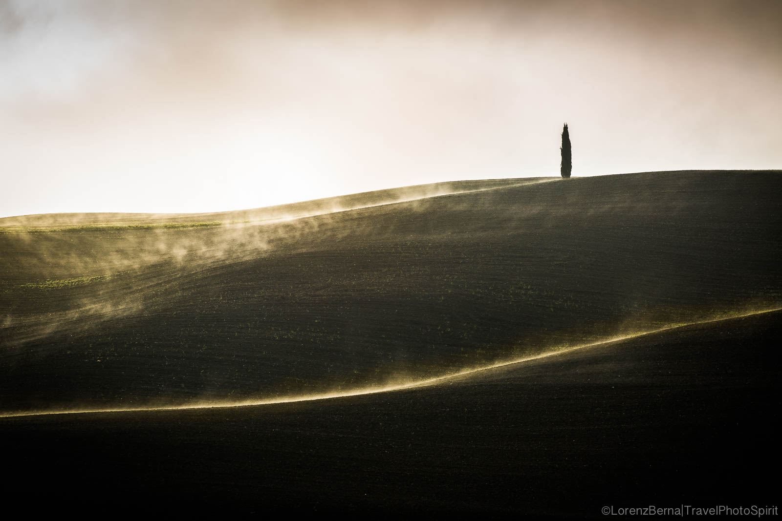 Lonely Cypress tree, between lights and shadows - A Lorenz Berna Photography of Italy
