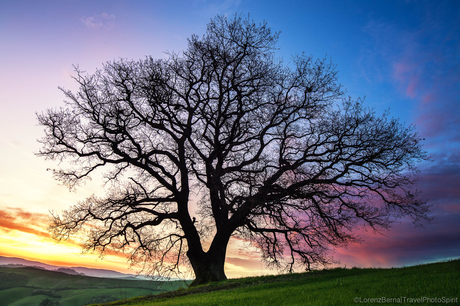Majestic Oak Tree of a valley in the Crete Senesi - A Lorenz Berna Photography of Italy.