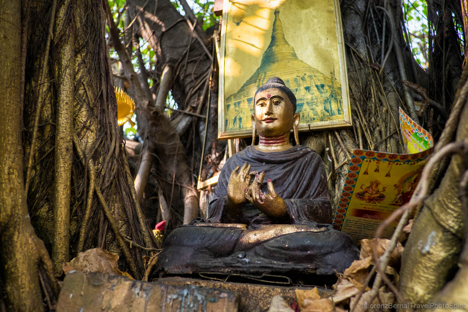 A Buddha statue nestled in the trunk of a banyan tree, in Yangon, Myanmar