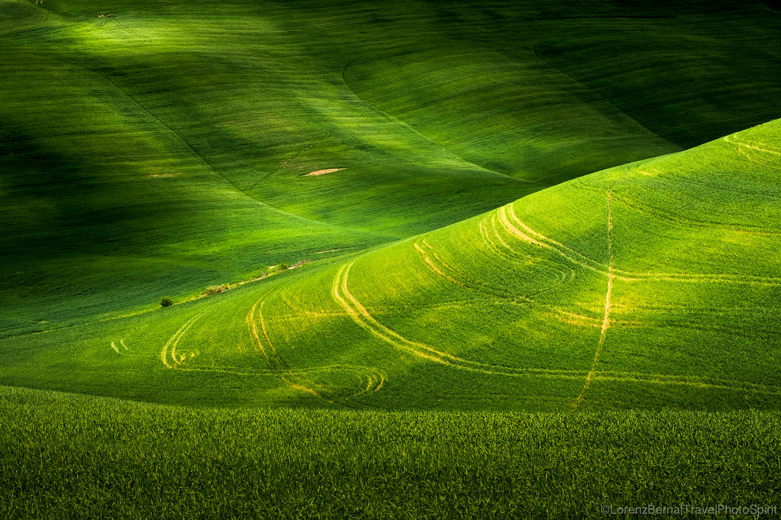 Shadows of Green on a hill, in spring time, Tuscany, Italy.