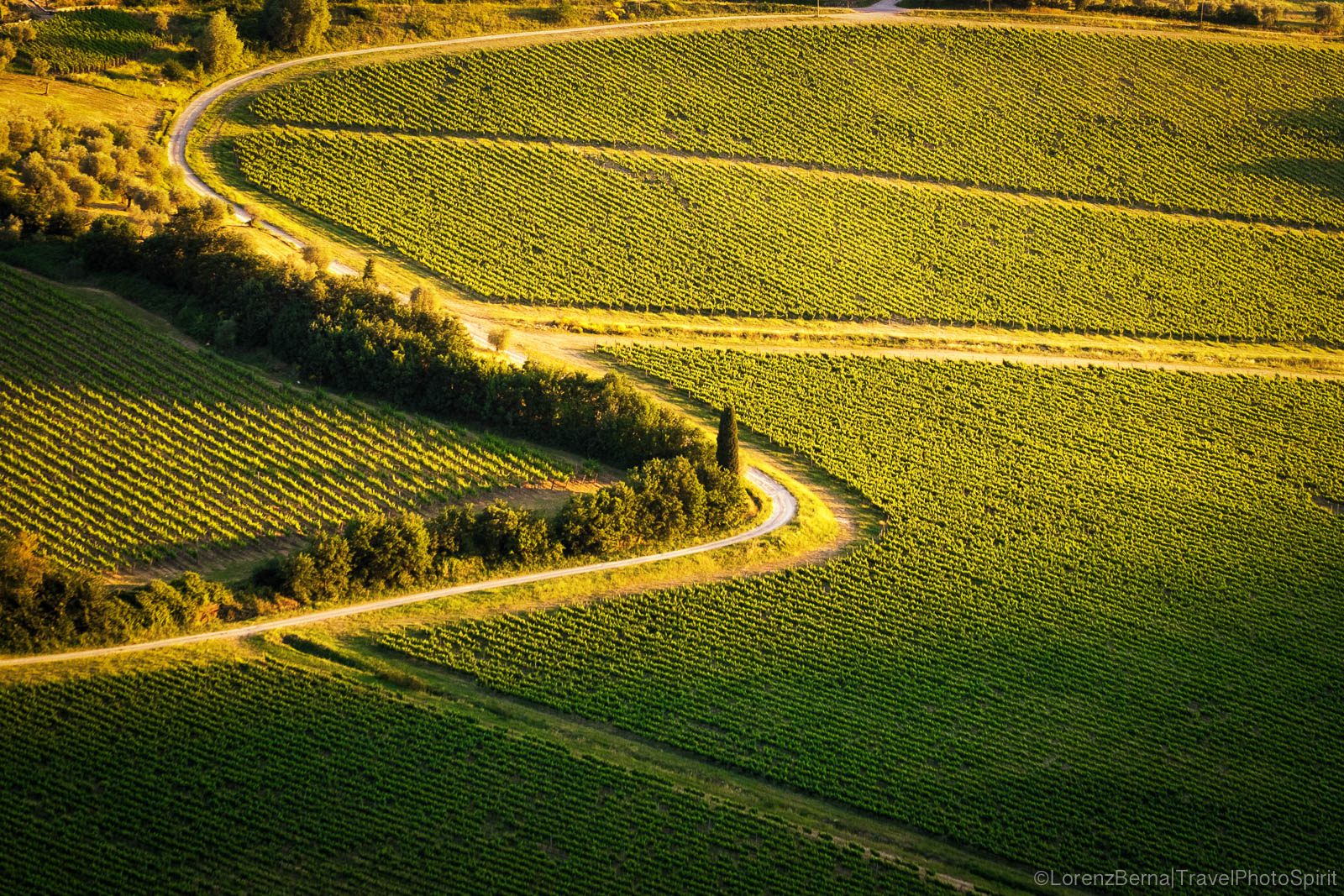 Vineyards lines and shapes in Tuscany, Italy