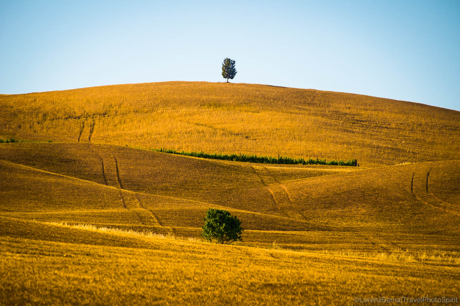 The golden colours of a wheat field in summer, Italy