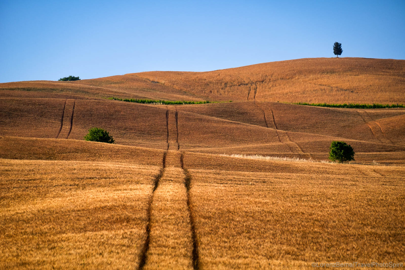 Fall colors on a wheat field, Tuscany, Italy