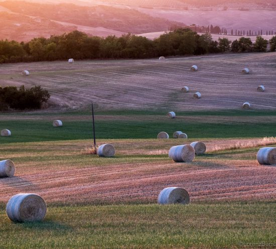 Straw balls in early summer - A Lorenz Berna Photography of Italy