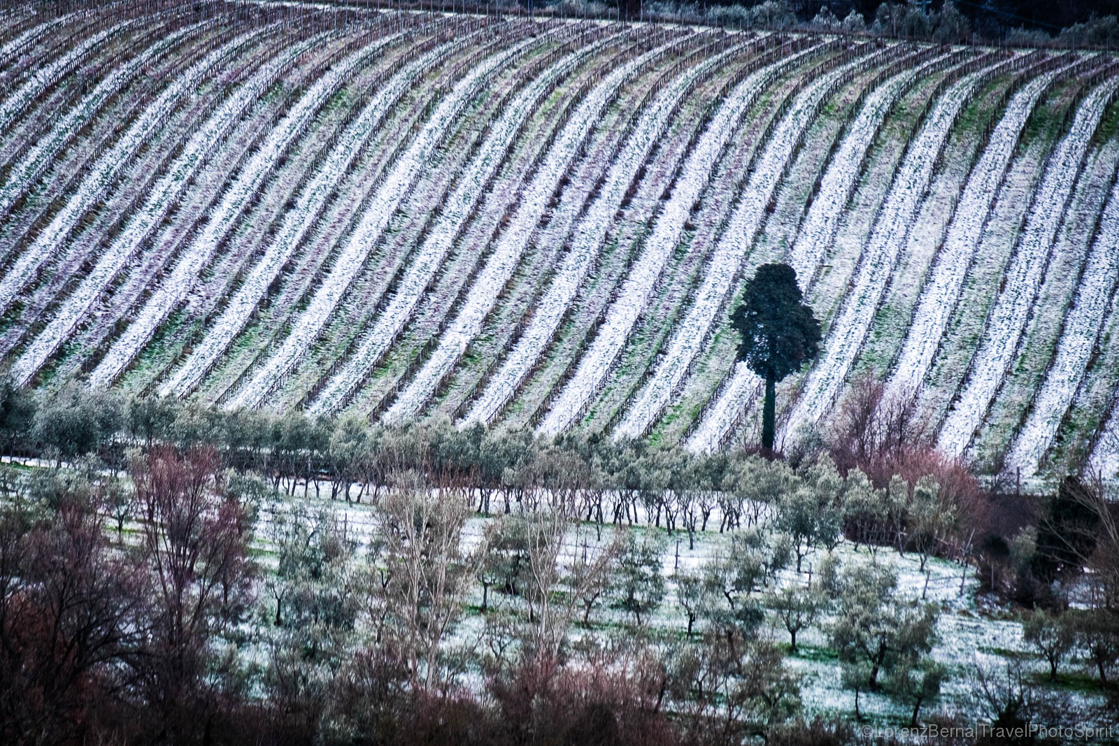 Field patterns in the snow, Italy