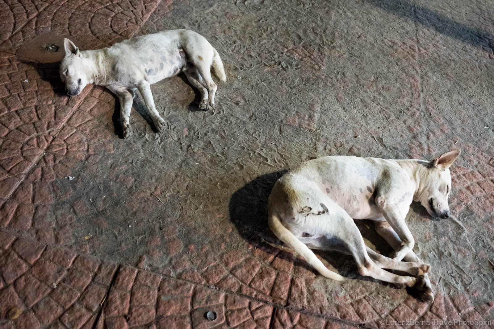 Dogs sleeping in the middle of the walkway, India
