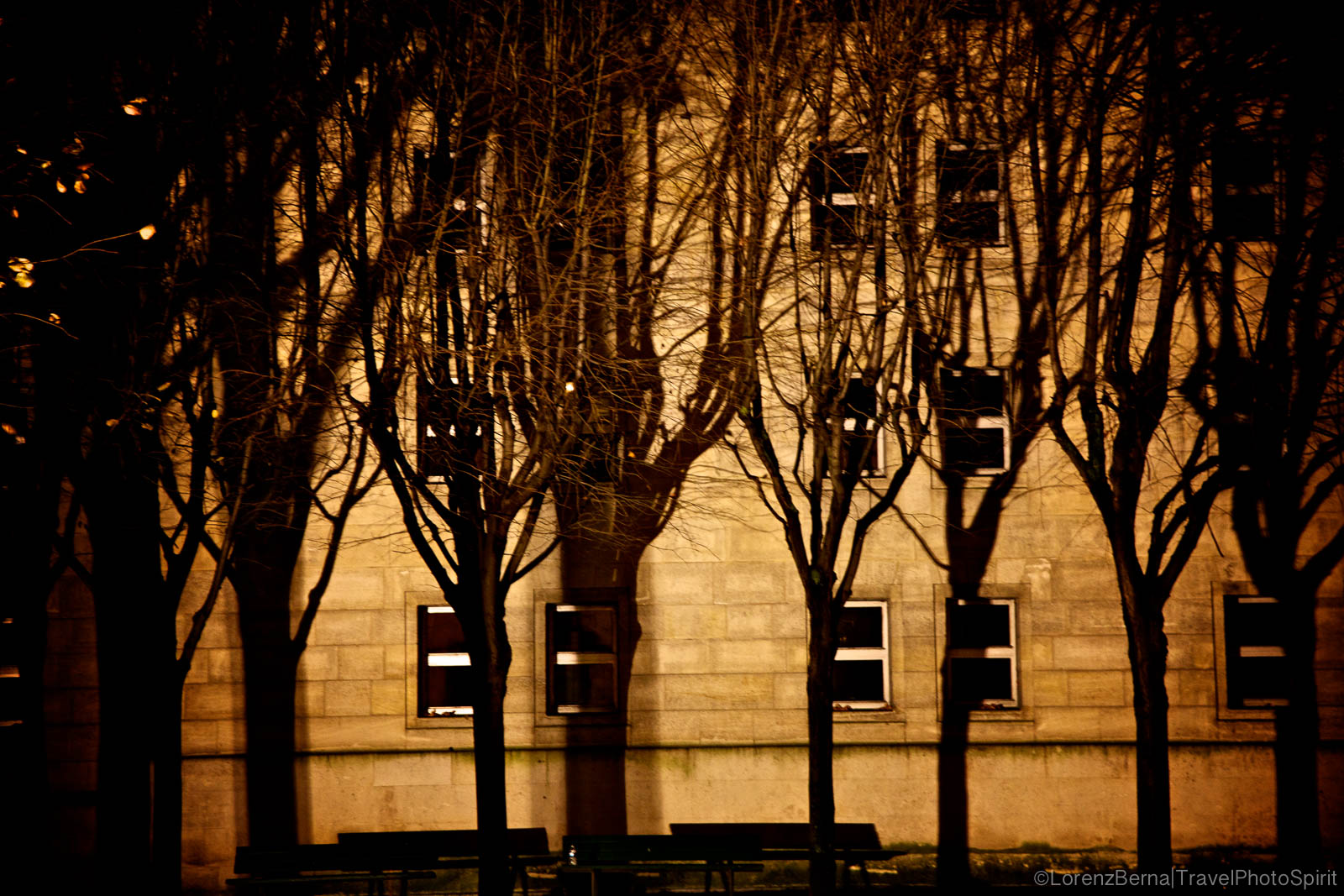 Trees along a wall in Paris, France