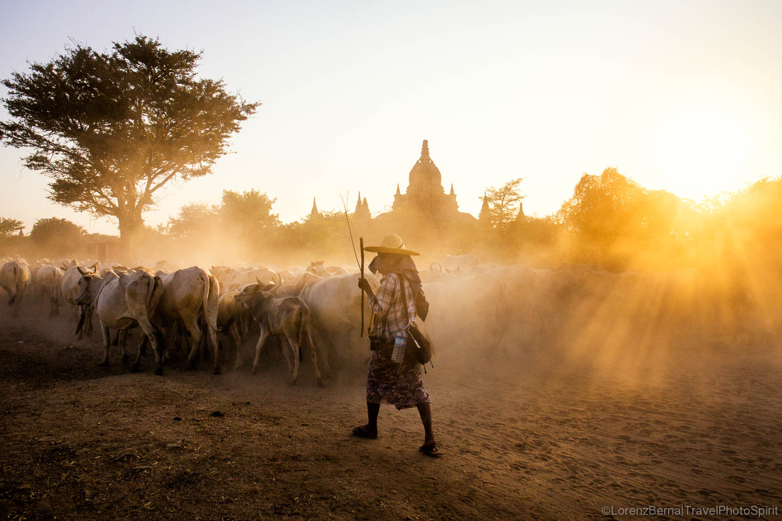 Farmer guiding her cows to the fields in Bagan - A Lorenz Berna Travel Photography of Myanmar