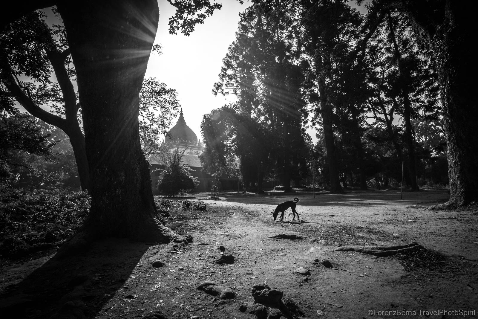 Black and white photography of a lonely dog in the quite solitude of the Forest near Vishwaroop Temple, Kathmandu, Nepal.