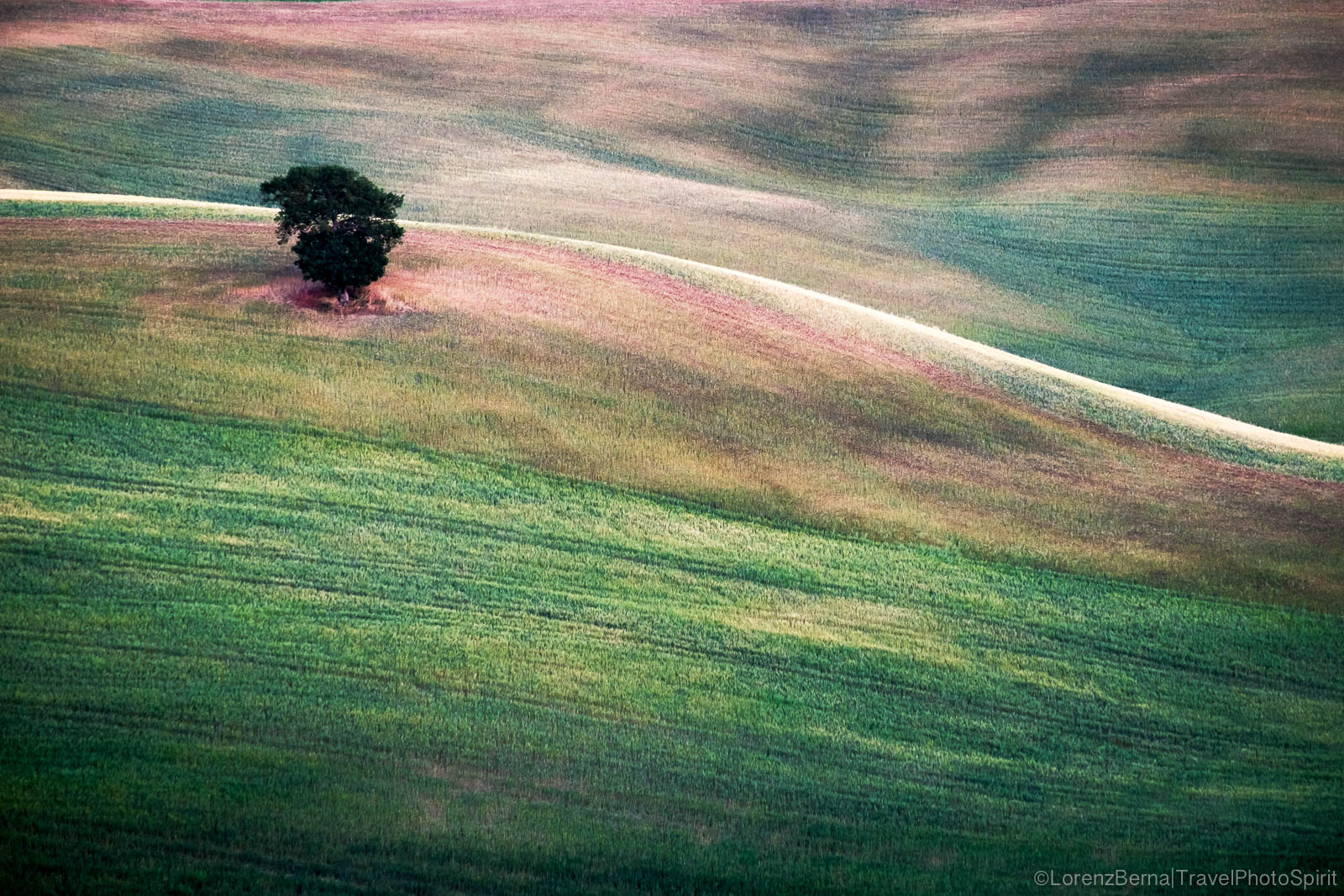 Lonely tree on a hill, Tuscany, Italy