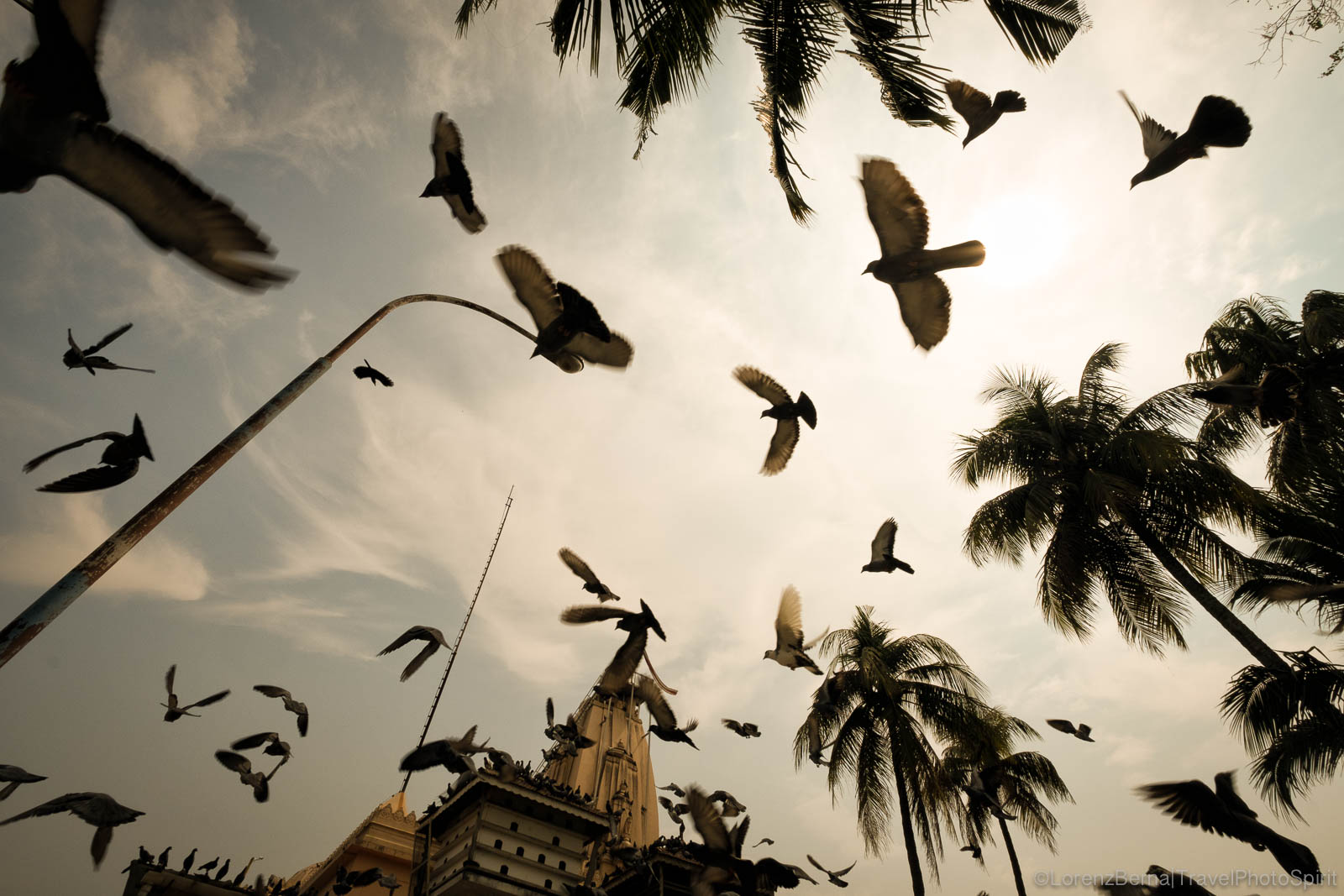 A group of pigeons are flying over the Jain temple of Kochi, kerala, India