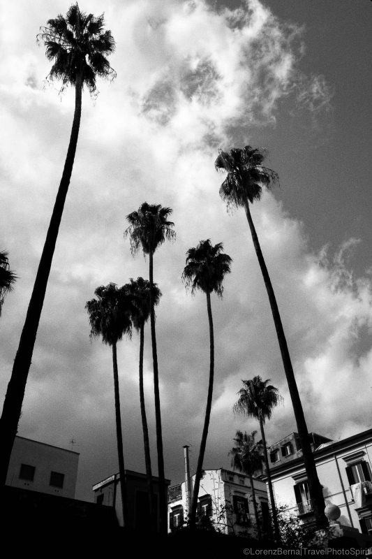 The Exotic Naples : palm trees raising up in the sky, Italy