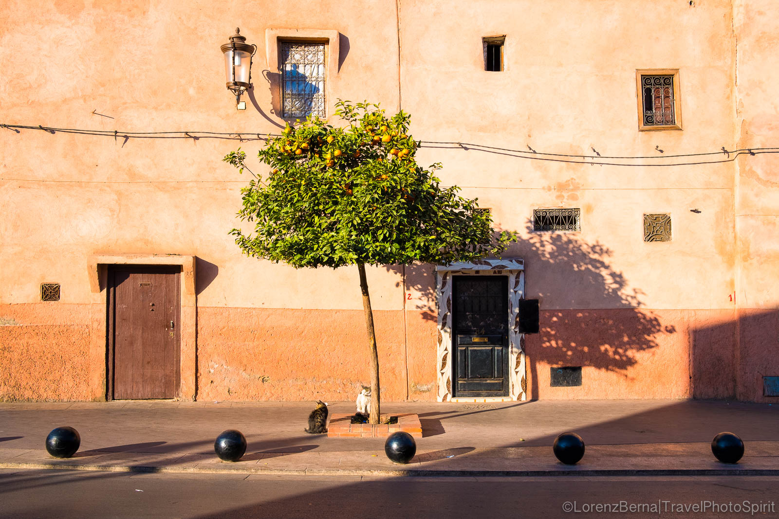 Play of colours : Moroccan orange tree in front of an orange painted wall in Marrakech, Morocco