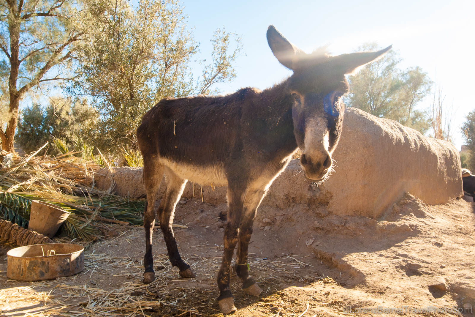 Donkey in the backlight in Skoura, Morocco