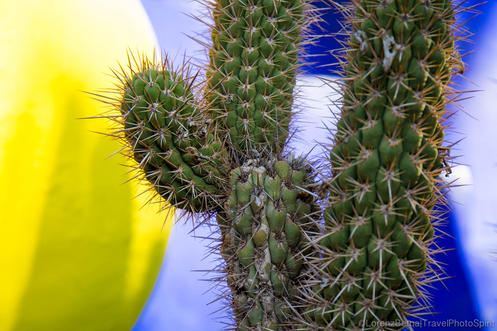 Close up of a cactus inside the Majorelle gardens of Marrakech