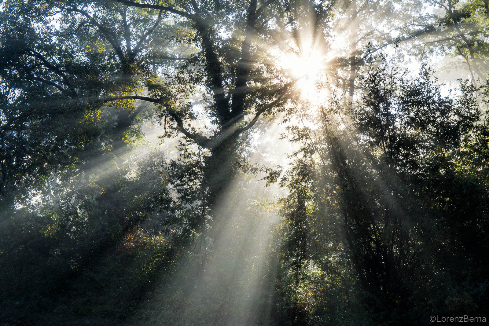 Mystic light in Chianti groves - Chianti Nature photography, Tuscany, Italy