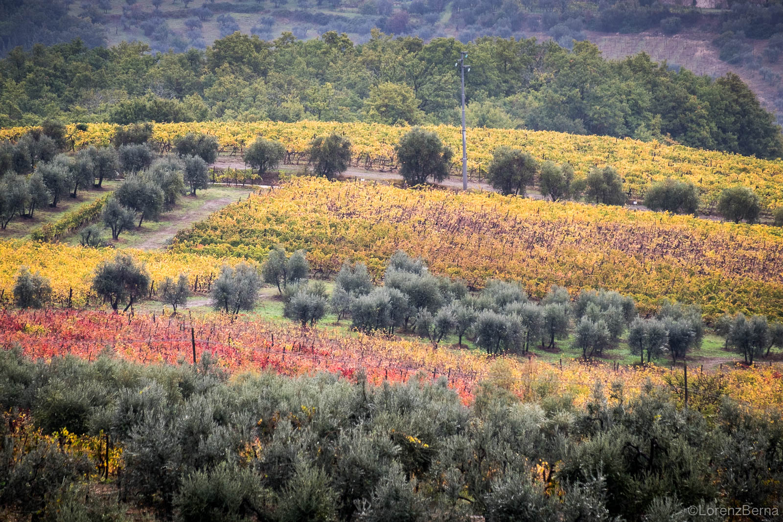 Chianti fields in autumn, Tuscany, Italy