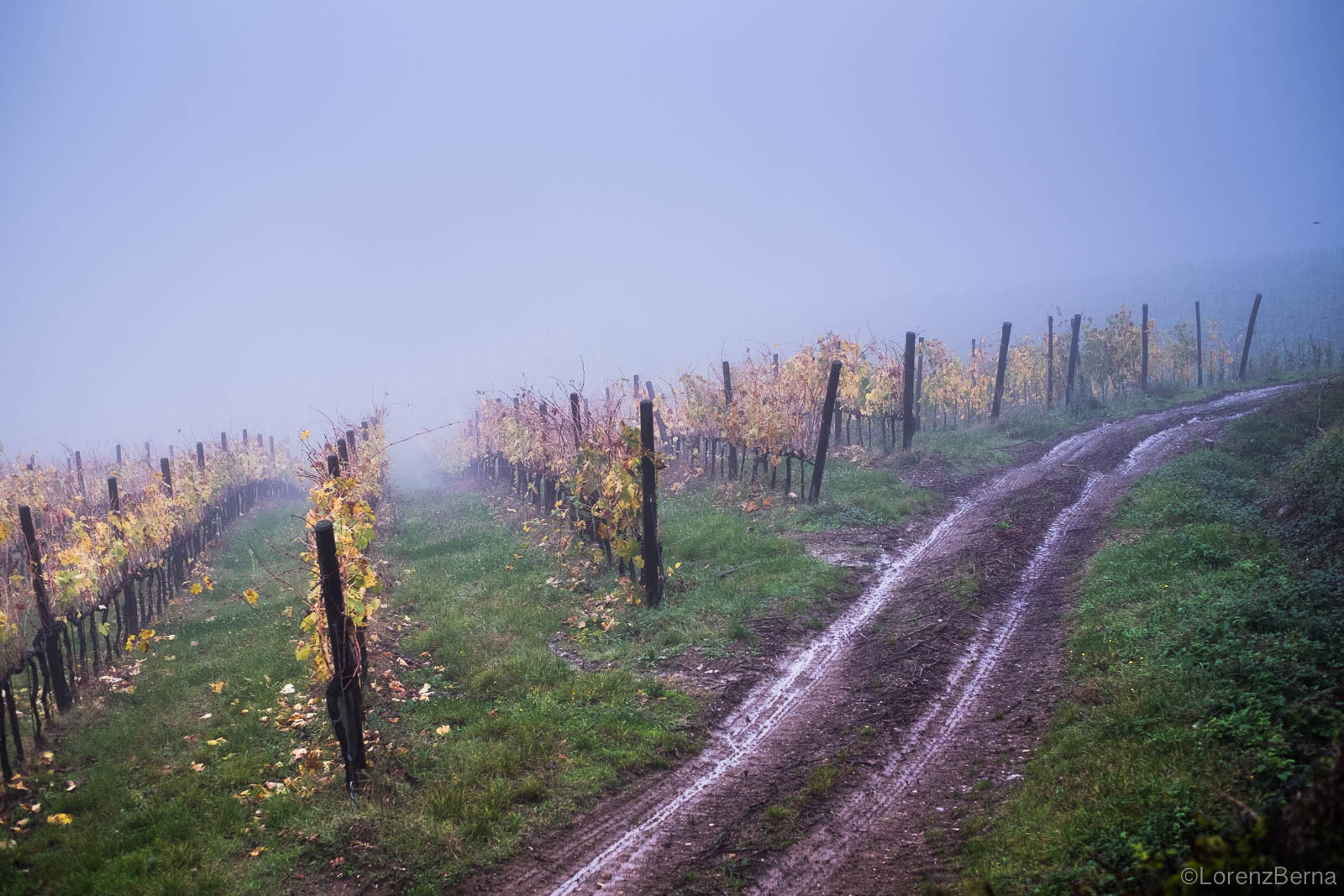 Wines field in the mist of autumn in Chianti, Italy