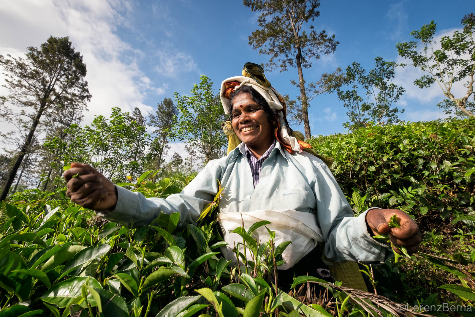 Tea picker at a plantation in Ella, Sri Lanka